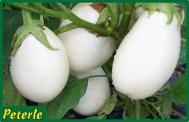 melanzana bianca ibrida