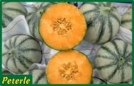 melone charentais ibrido
