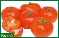 pomodoro insalataro grosso ibrido