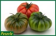 pomodoro marmande