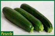 zucchina verde ibrido