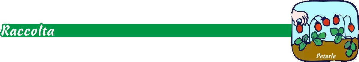vivaiopeterle-raccolta-orto